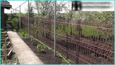 Trellis near the young seedlings