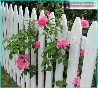 Wooden fence, twined with flowering plants