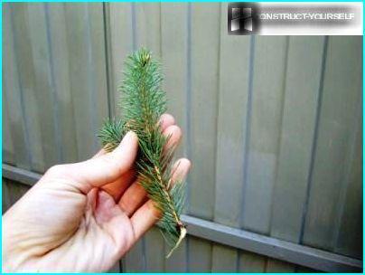 Sprout Baum konischer