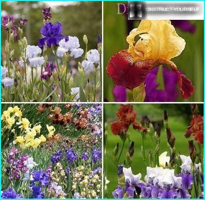 Verpflanzungsverfahren