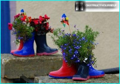 Pots of lobelia for rubber boots