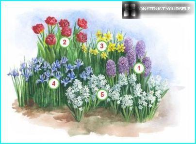 Ein Blumenbett mit Iris