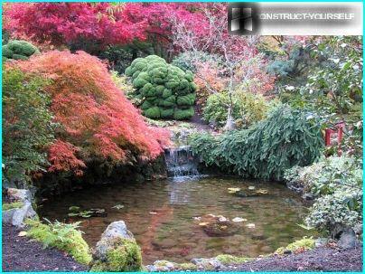 Pond in landscaped garden