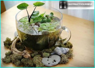 Pond in the cup