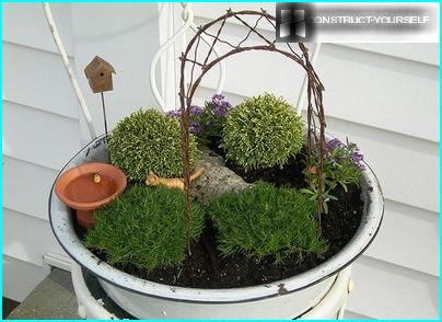 Wide basis for arranging a mini-garden