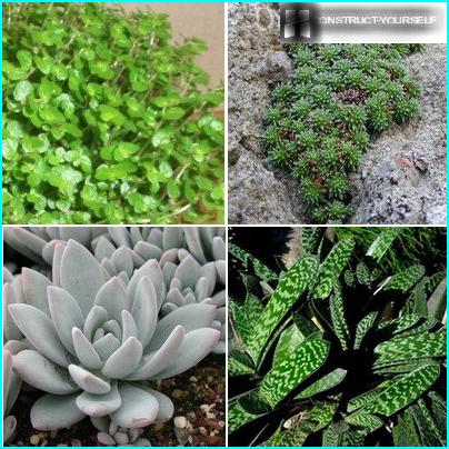 Växthus Polykarbonat: design alternativ och bygga sina egna händer