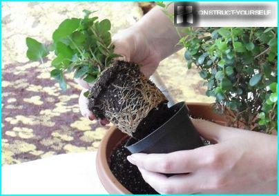 Pflanzenlandetechnik