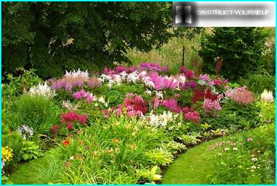 Perennial sollte vorzugsweise so sein, dass in all seiner Pracht nicht nur die zarten Blüten gebracht, aber seine Augen öffnete anmutige Blätter