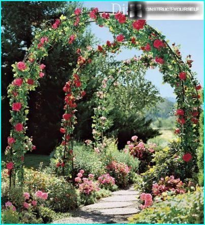 Arches of roses