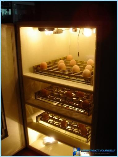 Wie man selbst einen Eierbrutkasten macht