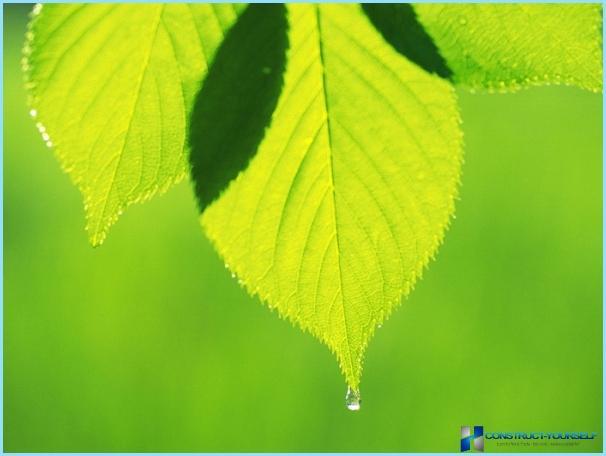 Groen fotobehang