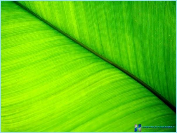 Carta da parati verde con foto