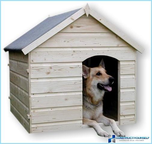 Paimenen, alabaiin ja muiden koirien koot