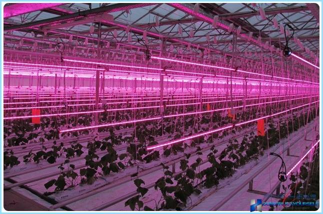 Greenhouse lighting led lamps