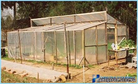 Mini serra domestica per piantine