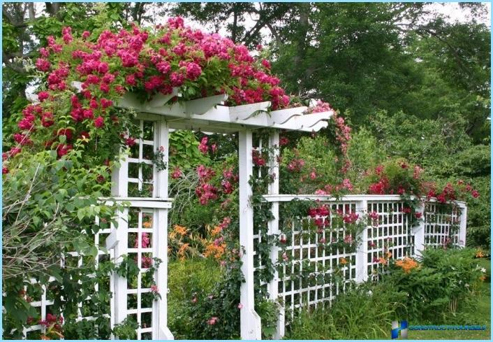 Vertikale Gartenarbeit zum Selbermachen auf dem Land