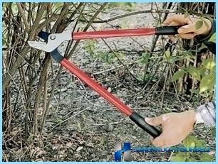 Hedgerow istutus