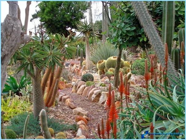 What plants are used for rockeries