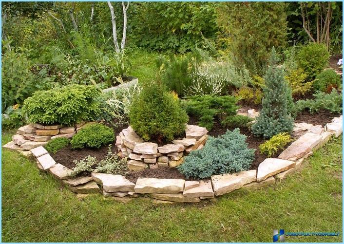 Quali piante vengono utilizzate per il giardino roccioso