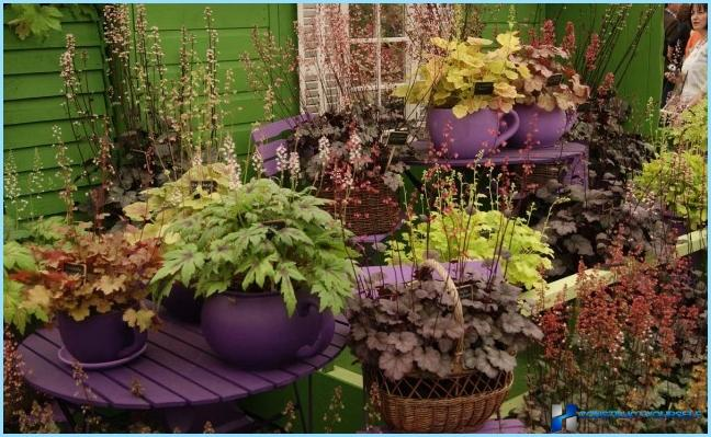 How to use gaharu in landscape design