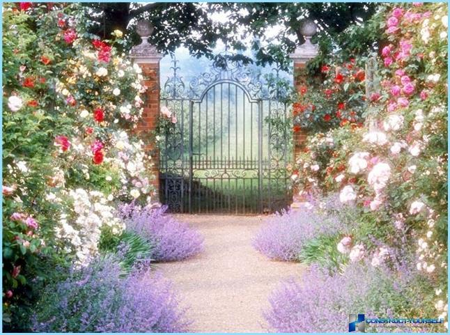How to use clematis in the landscape design