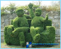 How to make a hedge of boxwood