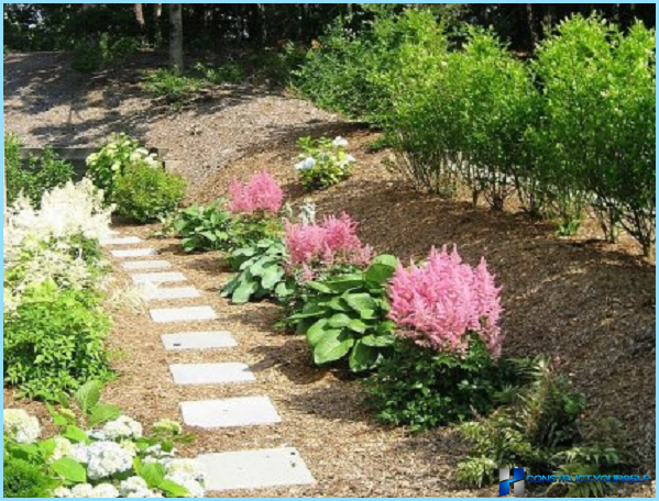 How to use the astilba in landscape design