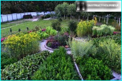 Der Aufruhr eines dekorativen Gartens mitten im Sommer