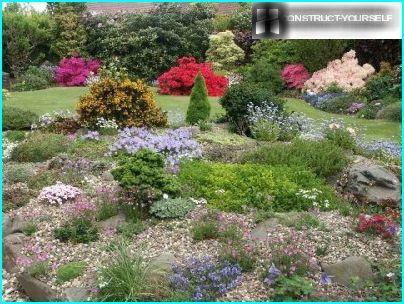 Jardin de rocaille au centre de la pelouse