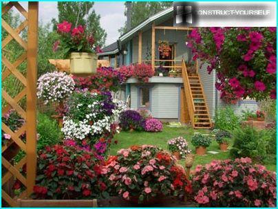 Ampelin puutarha
