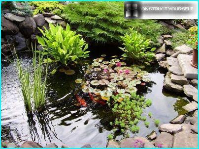 Jardin de rocaille avec un étang