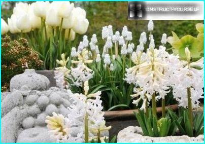Monokrom hvid have