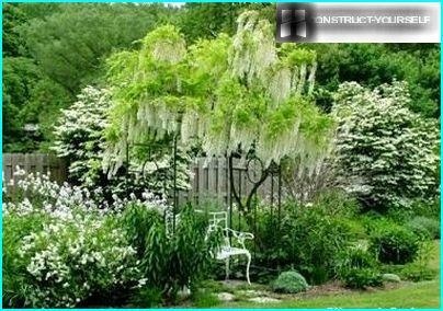 Garden Sissinghurst White Garden