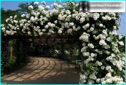 Graceful arch with climbing rose