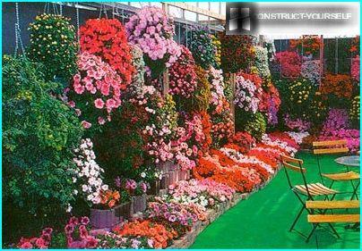 Ampeller i haven