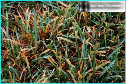 Rost auf dem Rasen