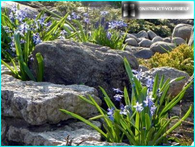 Rock puutarha kivi