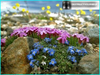Fleurs dans le jardin de rocaille