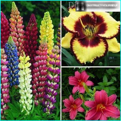 Flowering plants for shaded areas
