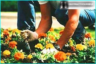 Kukkahoito