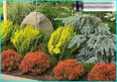 Una panoramica delle migliori varietà di arbusti ornamentali per l'organizzazione di un giardino