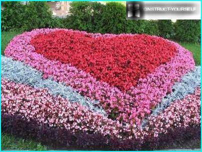 زهور البتونيا
