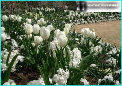 سرير زهرة بيضاء