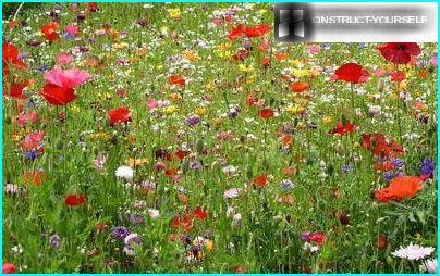 Morisk græsplæne