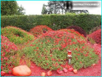 Punainen kukkapenkki