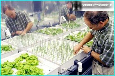 Ravinne kasvien istuttamiseen