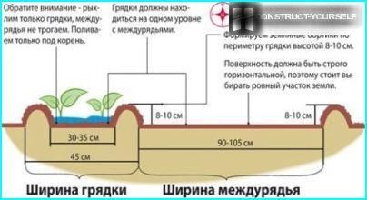Gultas shēma