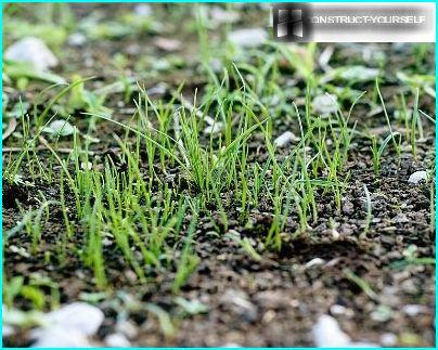 Seeding a lawn in winter