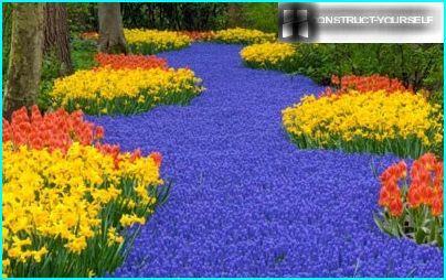 Påskeliljer, tulipaner, muscari