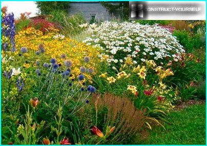 A flower bed of tall perennials